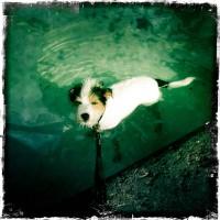 LittleHunterman-Hot Dog-Pool Dog
