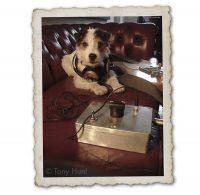 Doggie Sound Engineer expert