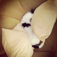 Little Hunterman, the expert pillow squeezer.