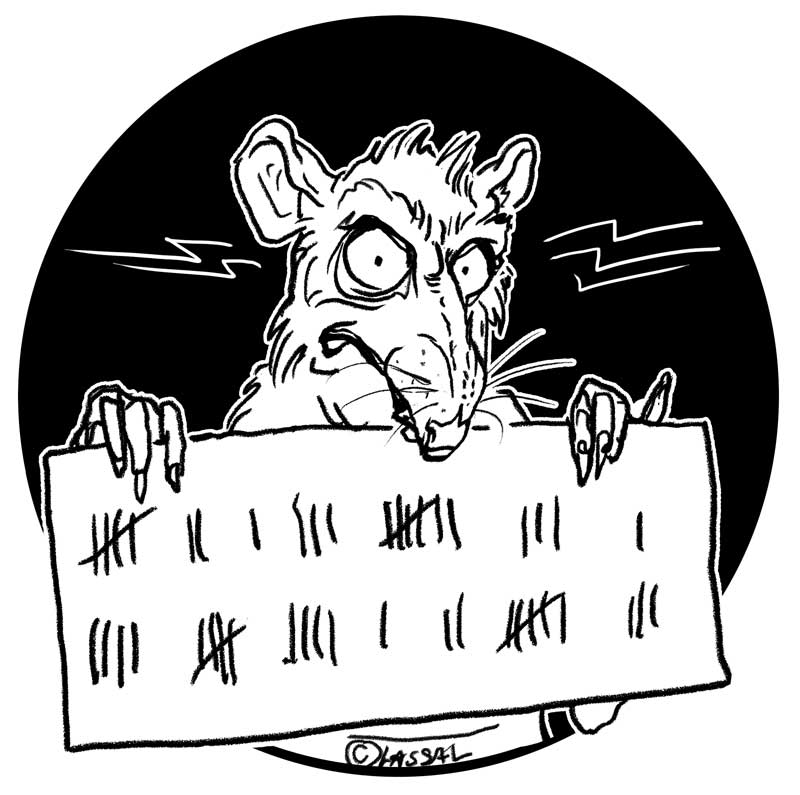 A WANTED RAT